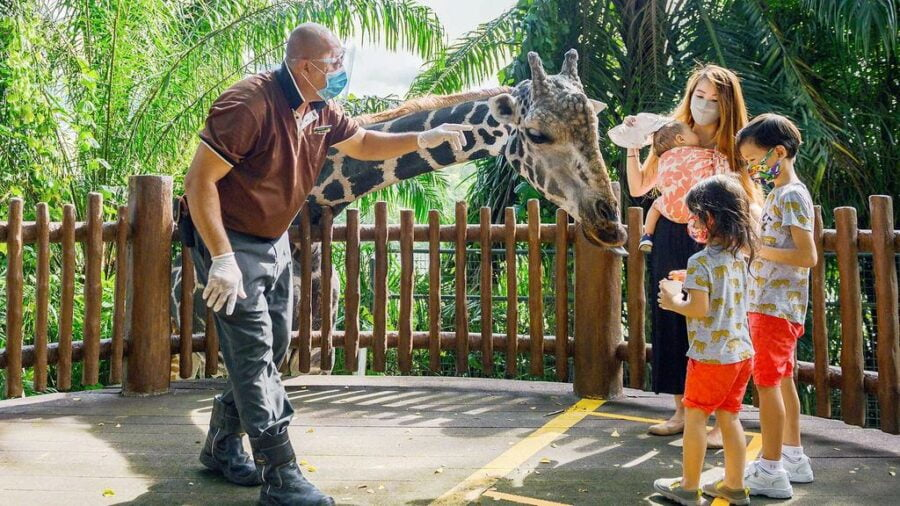 Fun Things To Do With Kids In Singapore on Weekends