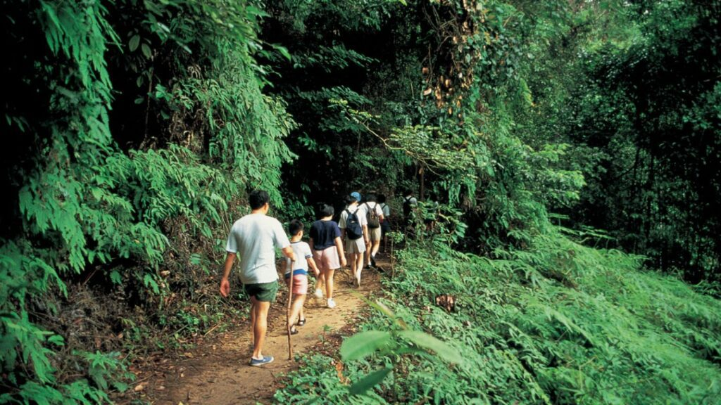 2. Hike the MacRitchie Reservoir Nature Trail