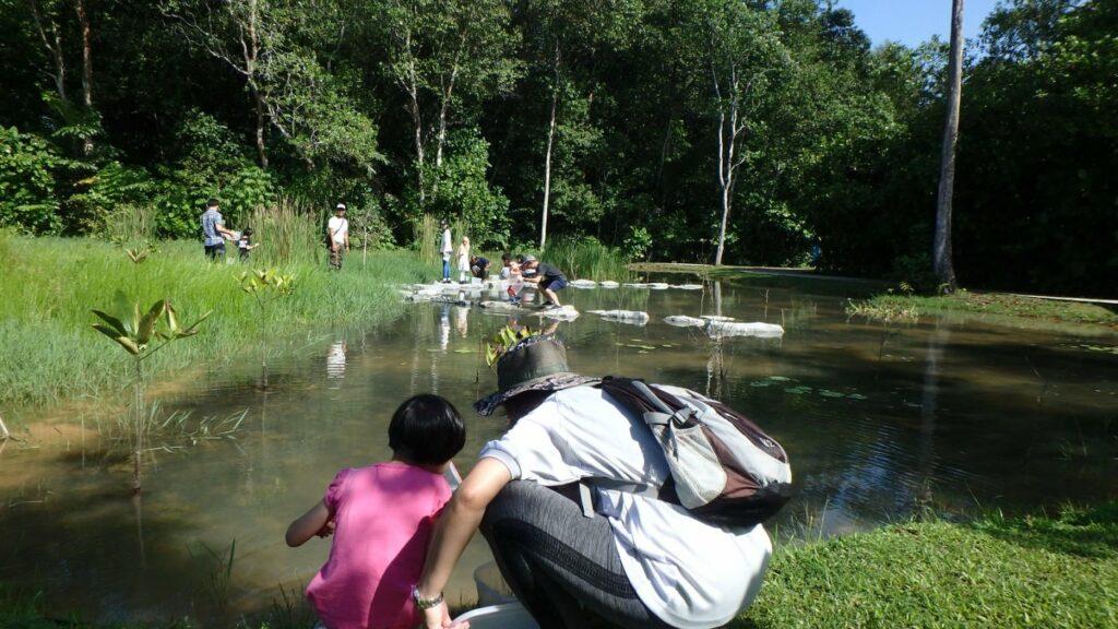 8. Explore Sungei Buloh Wetland Reserve